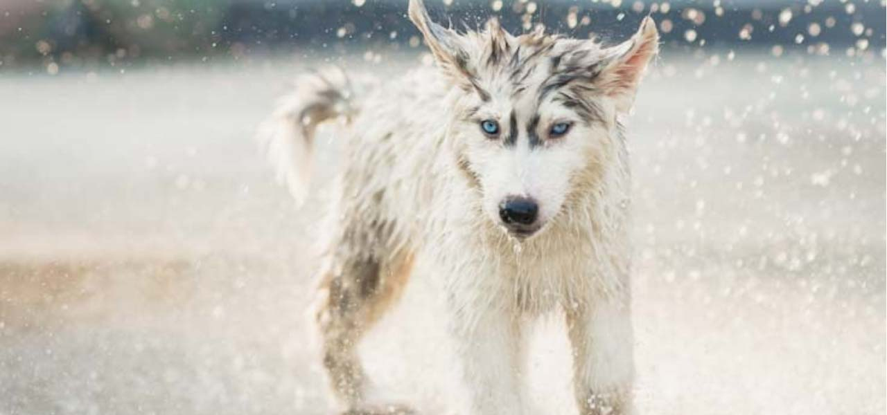 How to keep dogs safe in cold weather