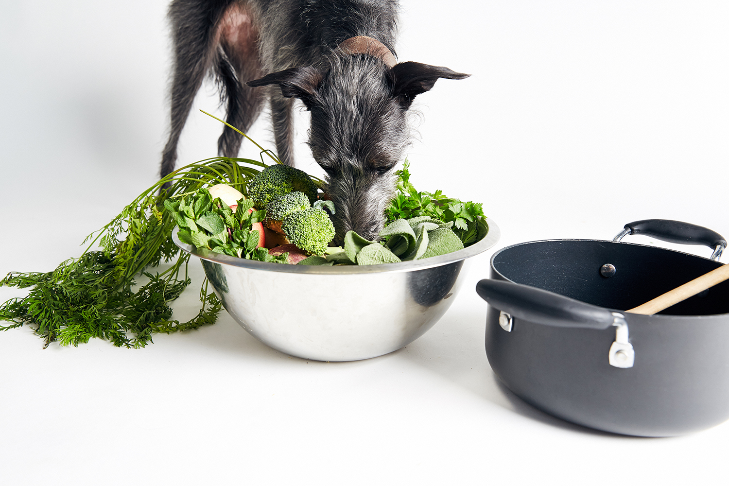 What Is The Best Diet For Dogs?