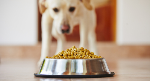 What you need to know about allergies and intolerances in dogs.