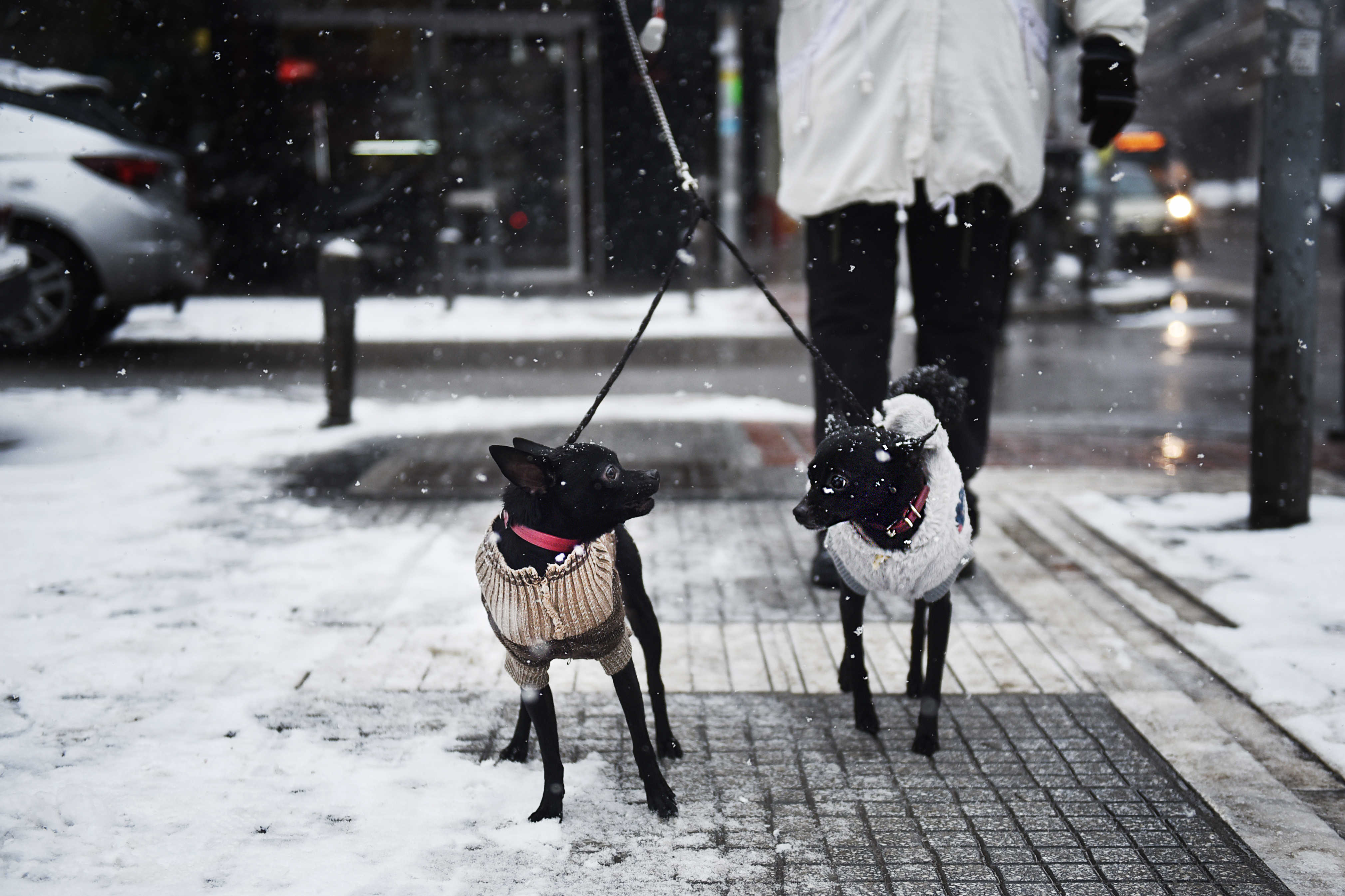 Top 5 Tips to Keep Your Dog Safe & Warm This Winter